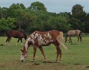 Seabrook Equestrian